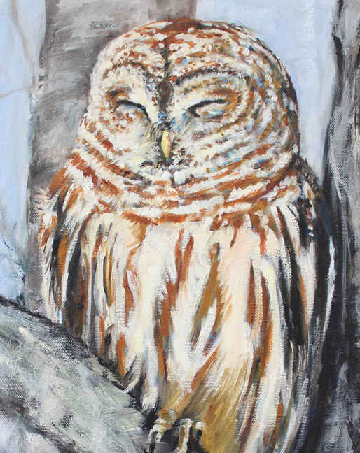 Resting Barred Owl by Meredith Reynells